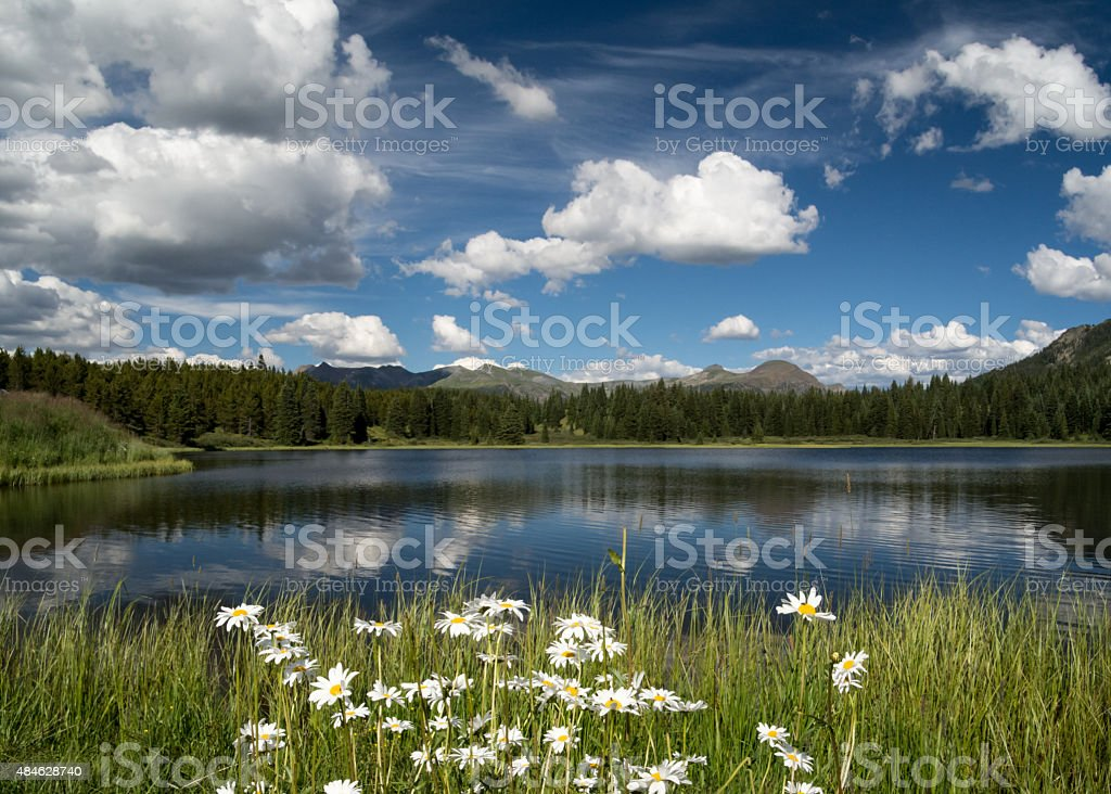Daisies at Andrew's Lake, CO with Cloud Reflection stock photo