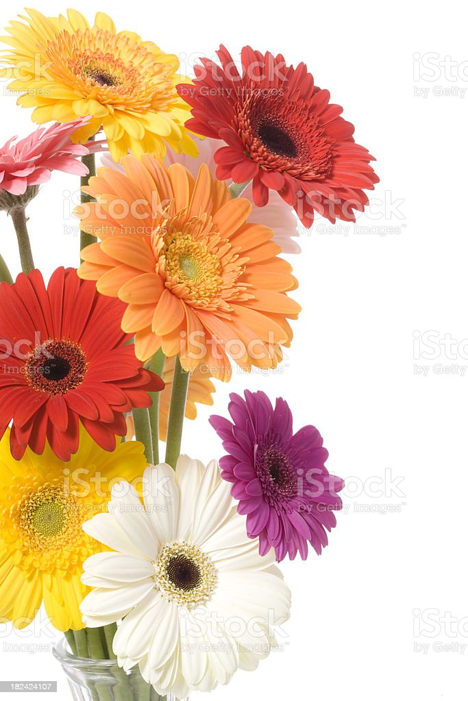 Daisies Bouquet stock photo