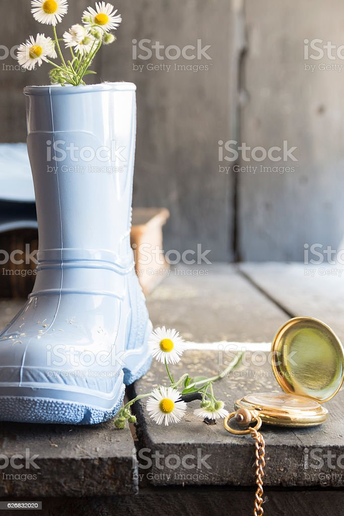 Daisies in a boot and pocket watch, flower background stock photo