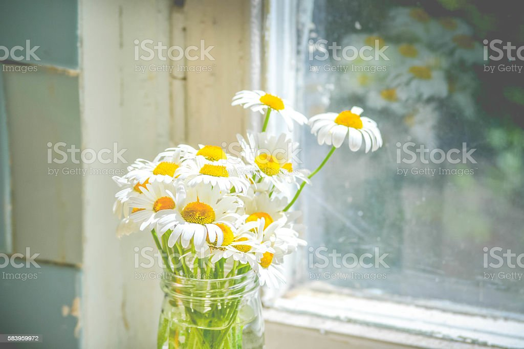daisies in a glass jar near window stock photo