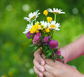 Daisies in hands of a child. Sunny spring background