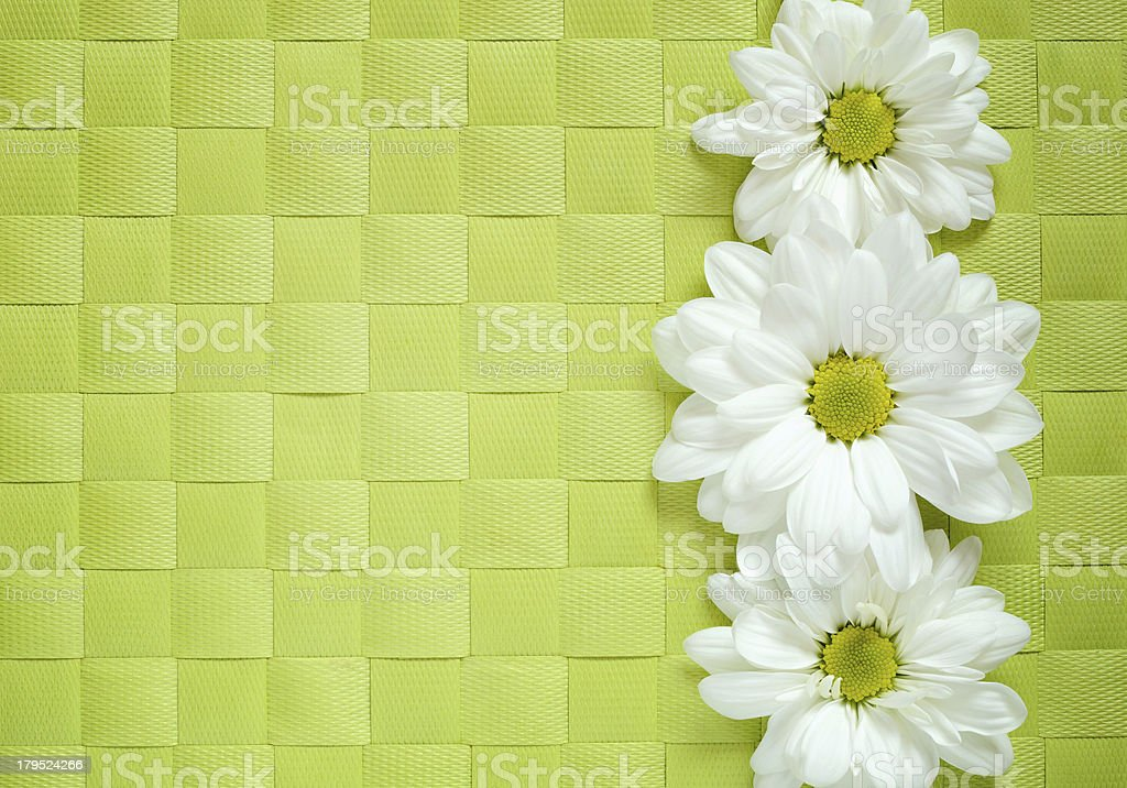 Daisies on green background royalty-free stock photo