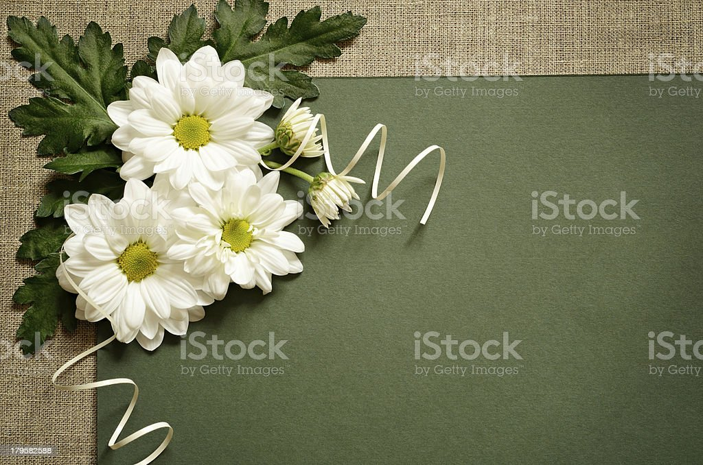 Daisies on green paper royalty-free stock photo