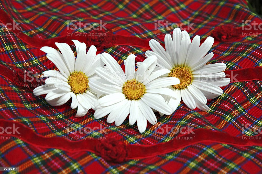 Daisies on Plaid royalty-free stock photo