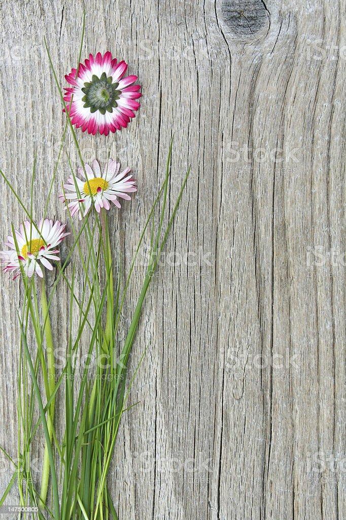 daisies photo libre de droits