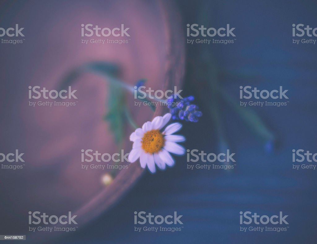 Daisy and lavender bloom in wooden bowl stock photo