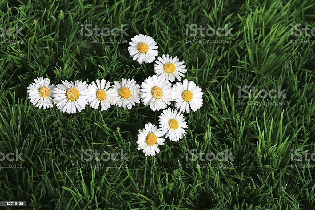 Daisy arrow sign in the lawn royalty-free stock photo