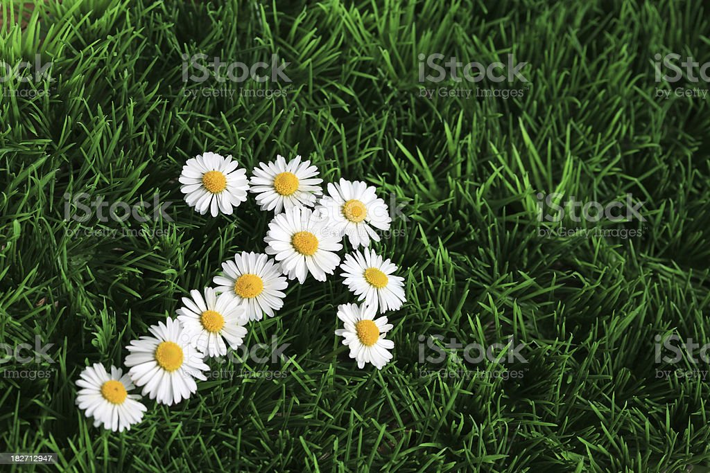 Daisy arrow sign royalty-free stock photo