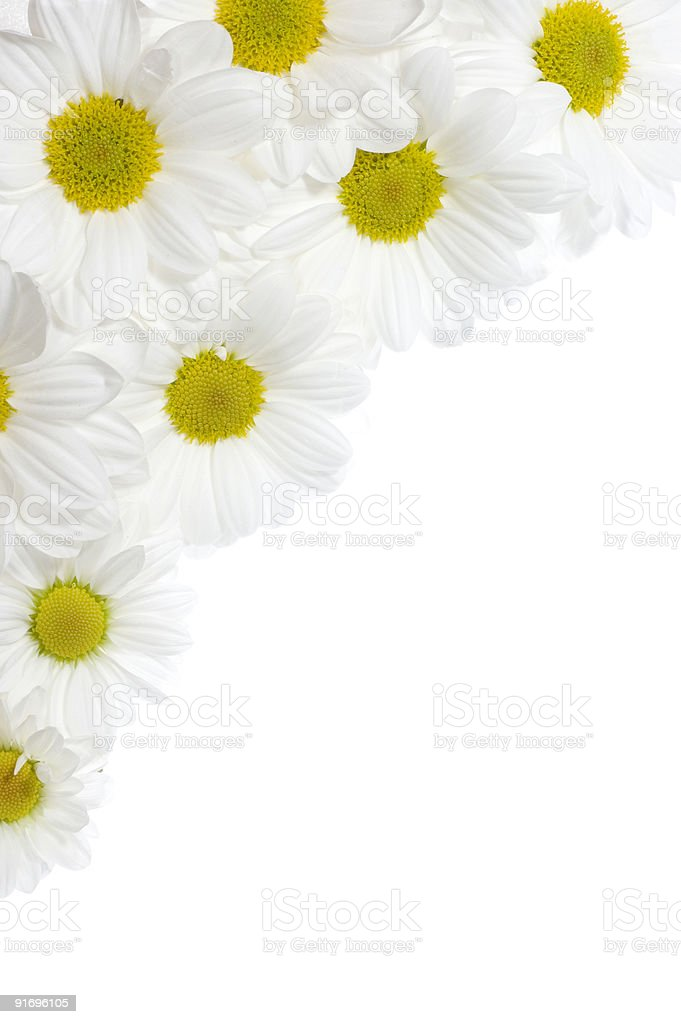 Daisy Border royalty-free stock photo