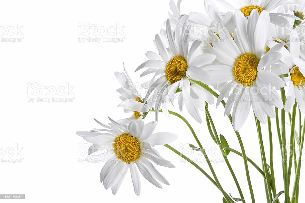 Daisy bouquet royalty-free stock photo