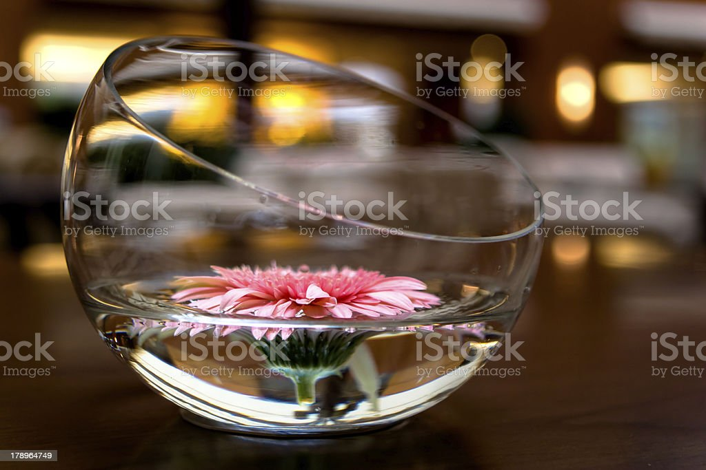 Daisy Bowl royalty-free stock photo
