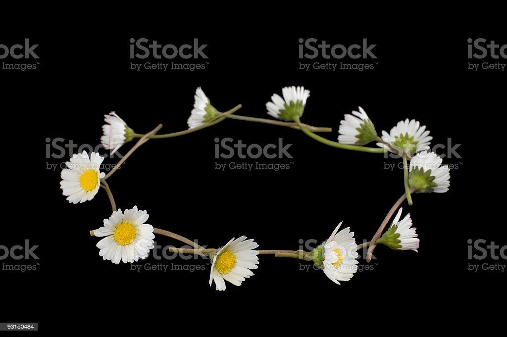 Daisy Chain on black stock photo