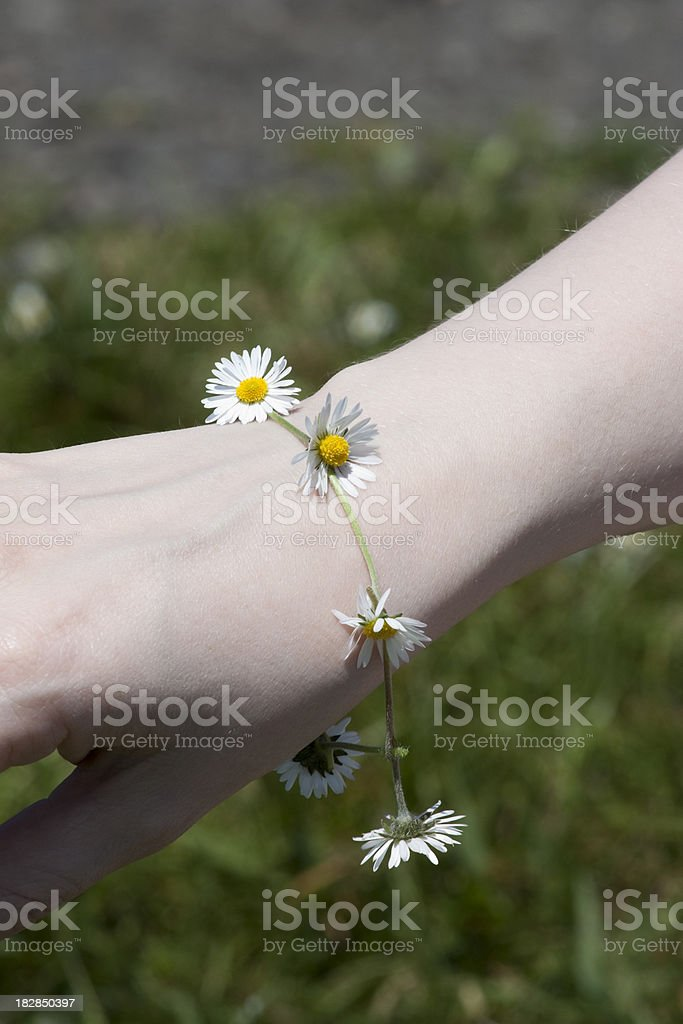 Daisy Chain on Female Hand stock photo