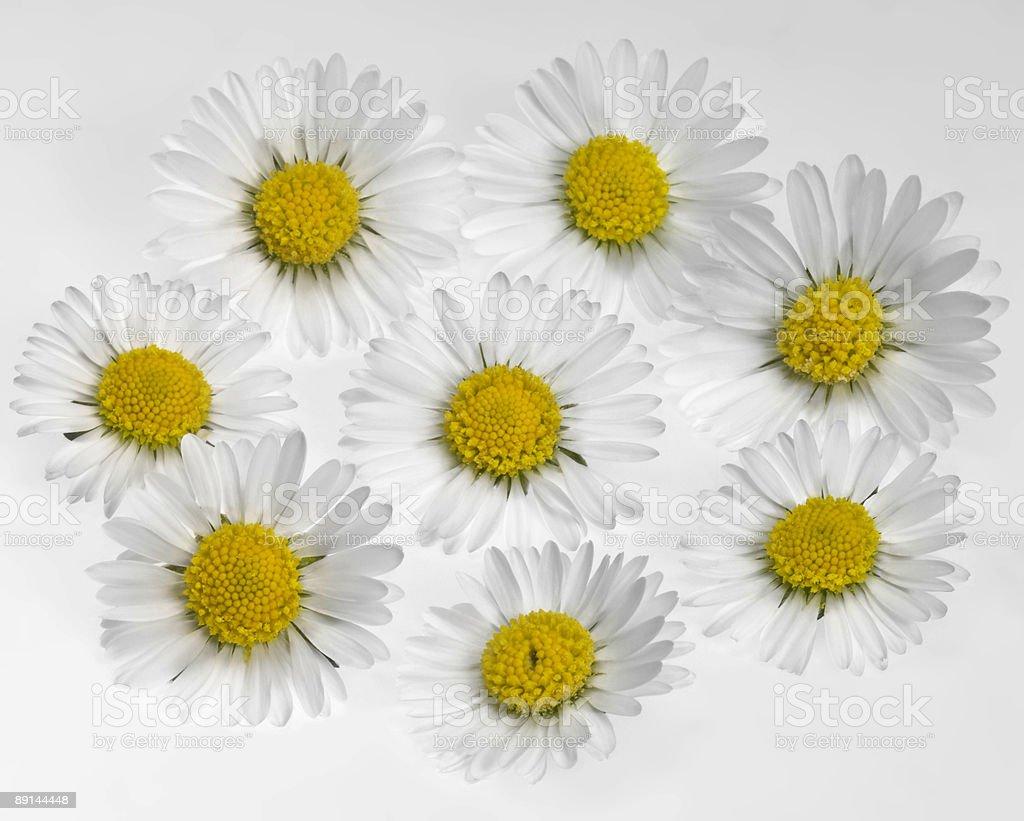daisy flower arrangement royalty-free stock photo