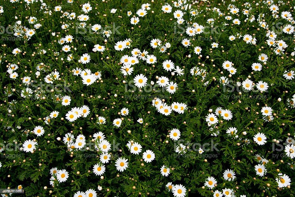 Желтый цветок в поле Стоковые фото Стоковая фотография