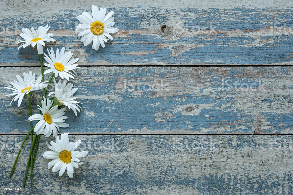 Daisy flowers on wooden background stock photo