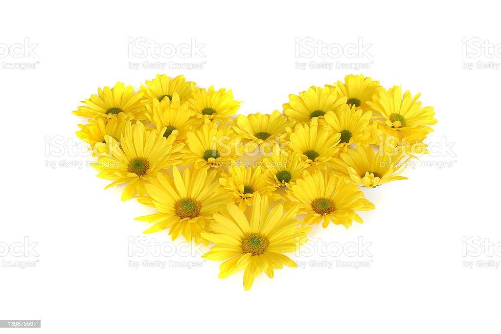 Daisy heart royalty-free stock photo