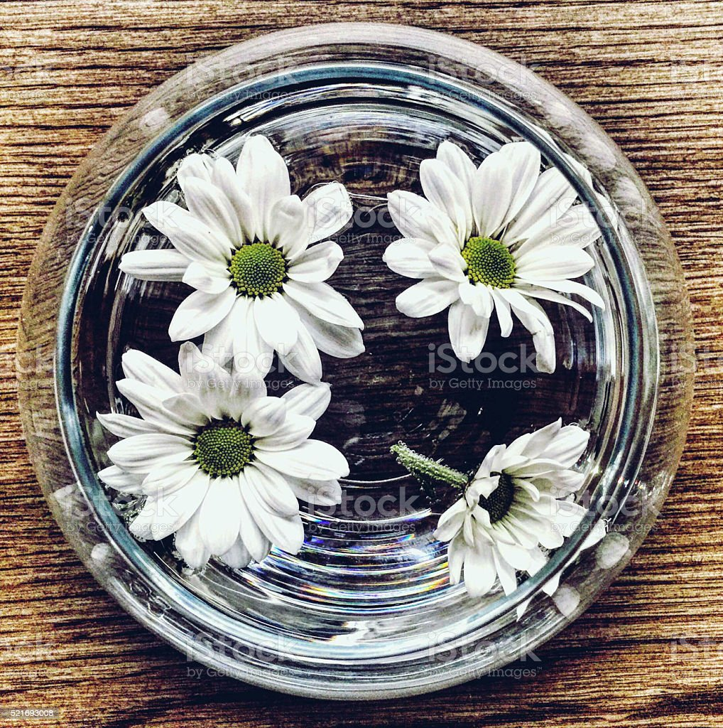 Daisy in Fishbowl stock photo