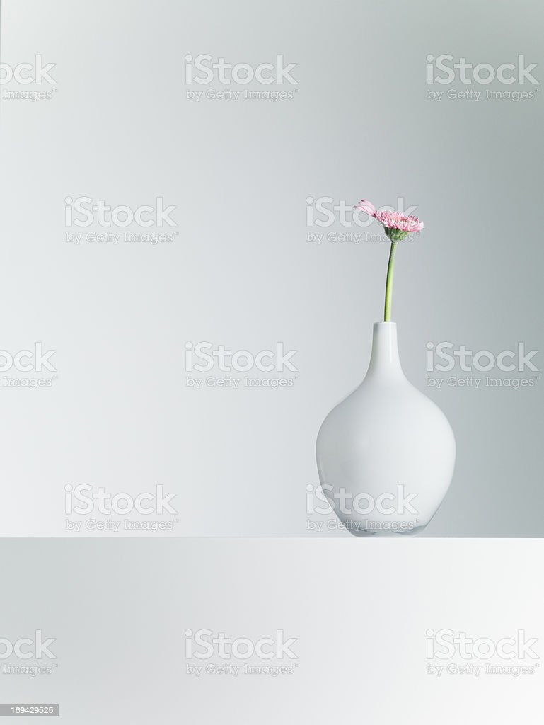 Daisy in vase on table stock photo