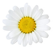 Daisy isolated inclusive clipping path