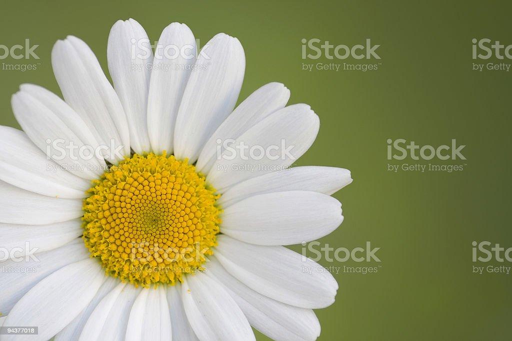 Daisy on green royalty-free stock photo