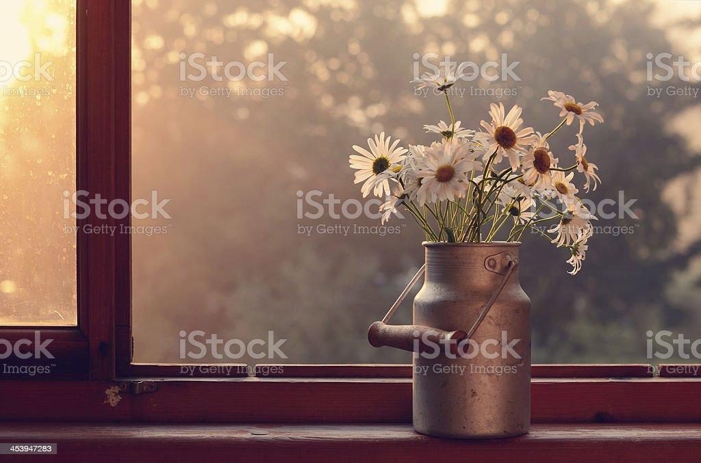 Daisy on windowsill stock photo