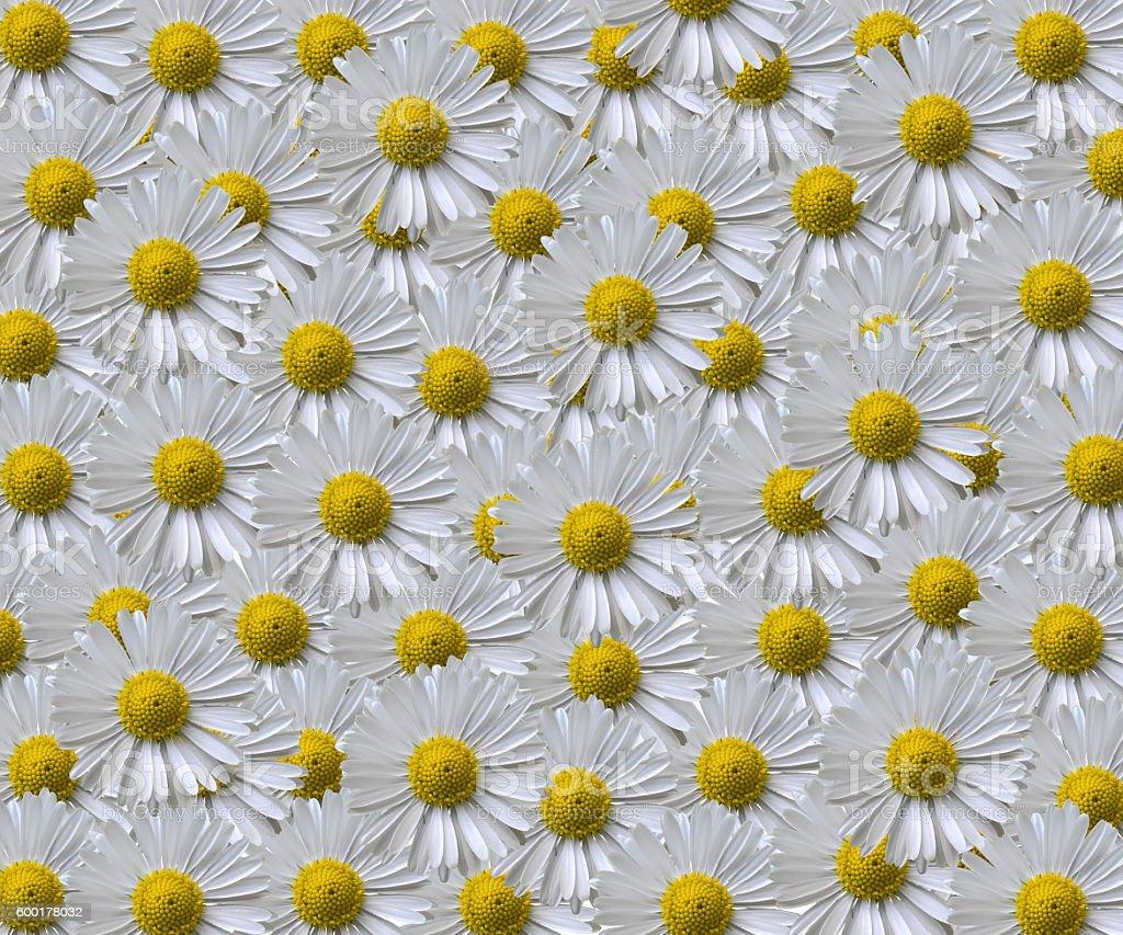 Daisy Pattern stock photo