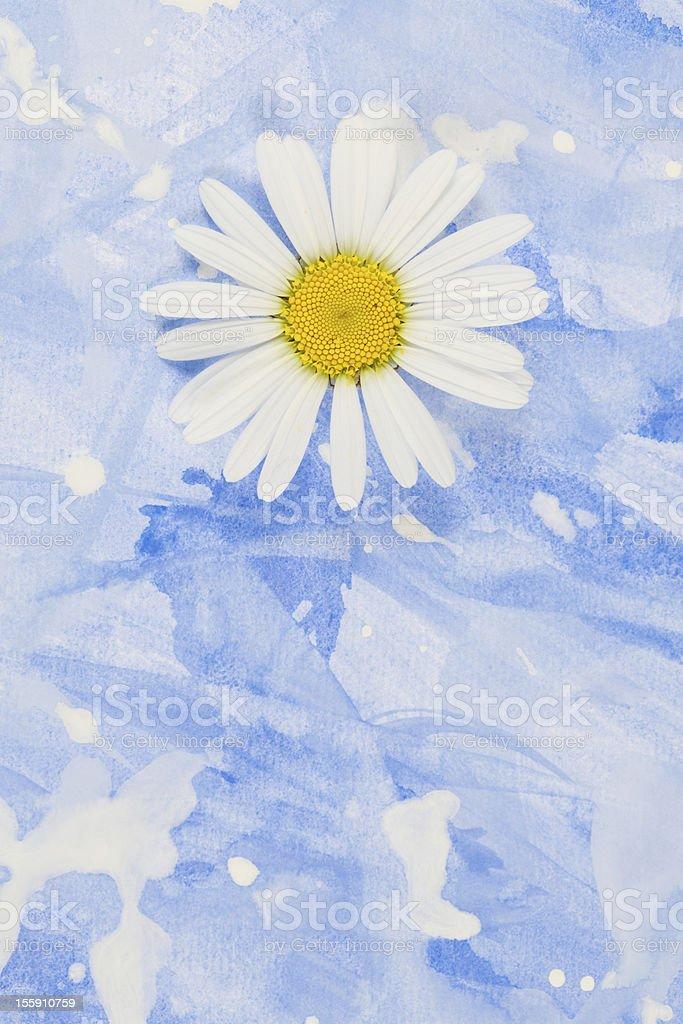 Daisy stock photo