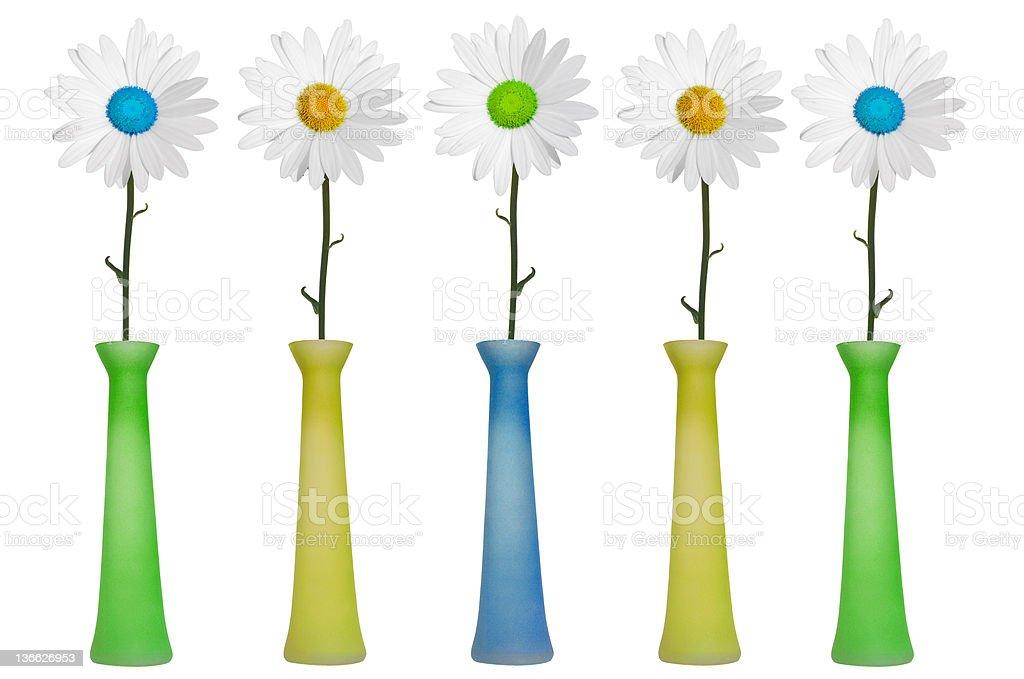 daisy vases royalty-free stock photo