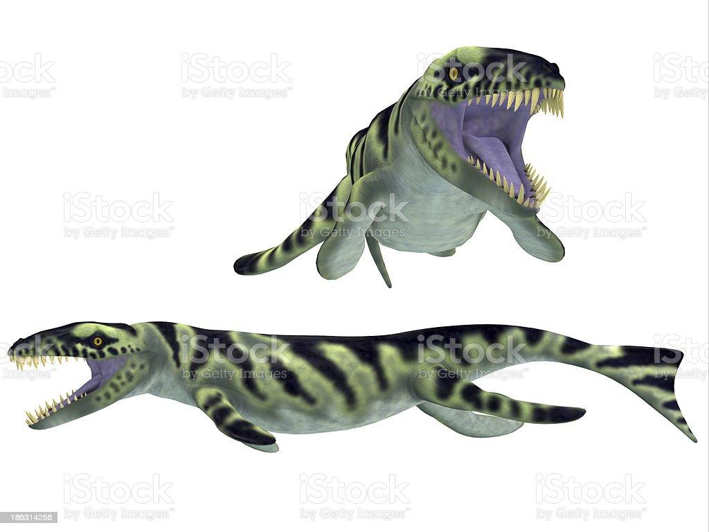 Dakosaurus on White royalty-free stock photo