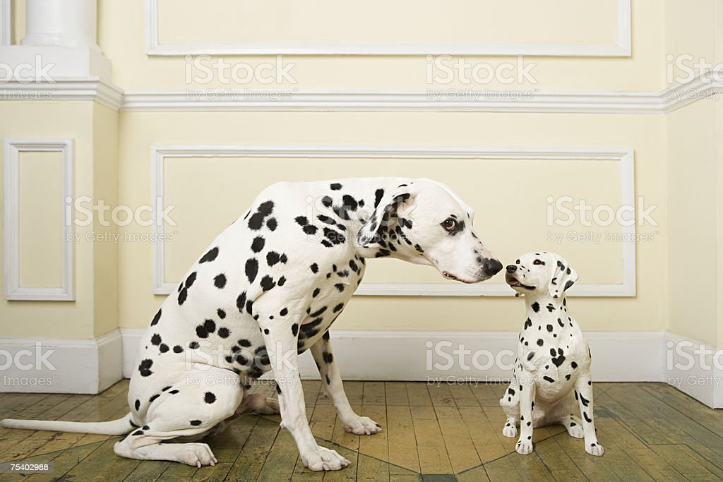 Dalmation with dog ornament stock photo