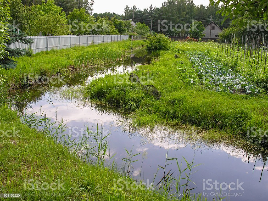 Dam breeding stock photo