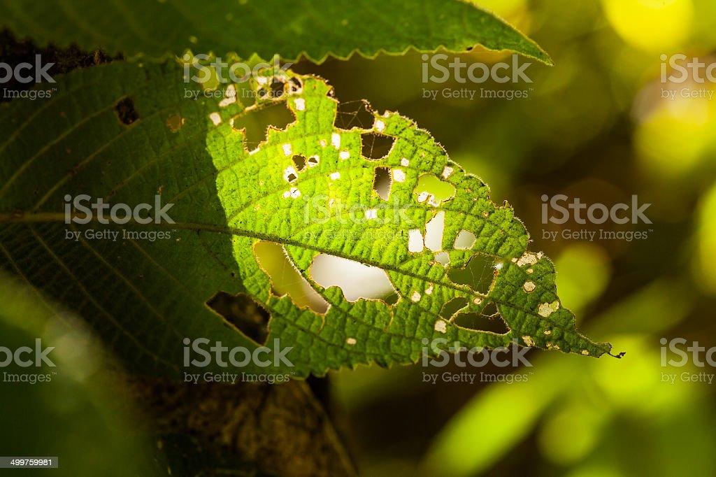 Damage leaf stock photo
