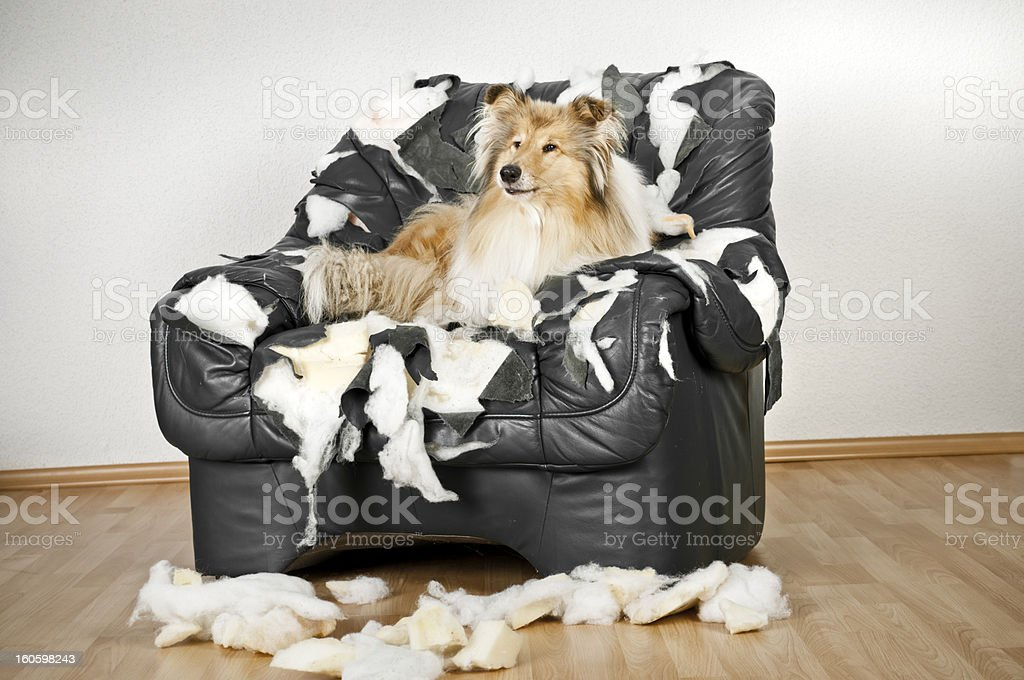 damaged chair royalty-free stock photo