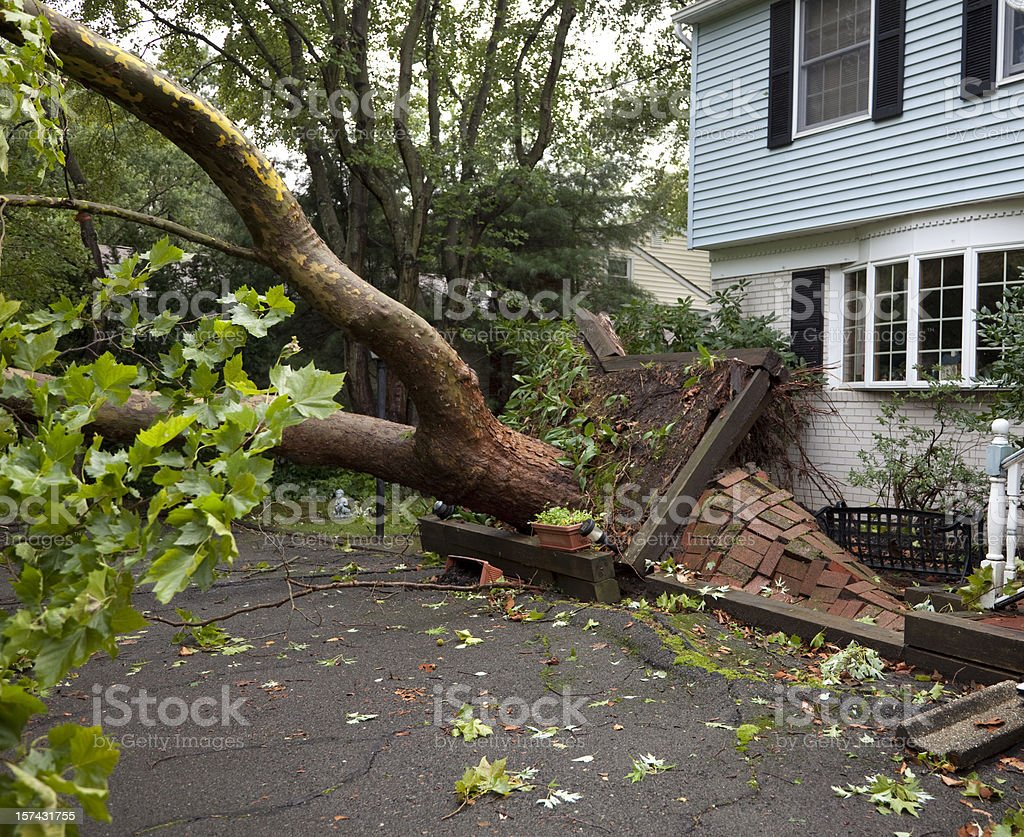 Damaged Sidewalk from Fallen Tree Uprooted by Tornado stock photo