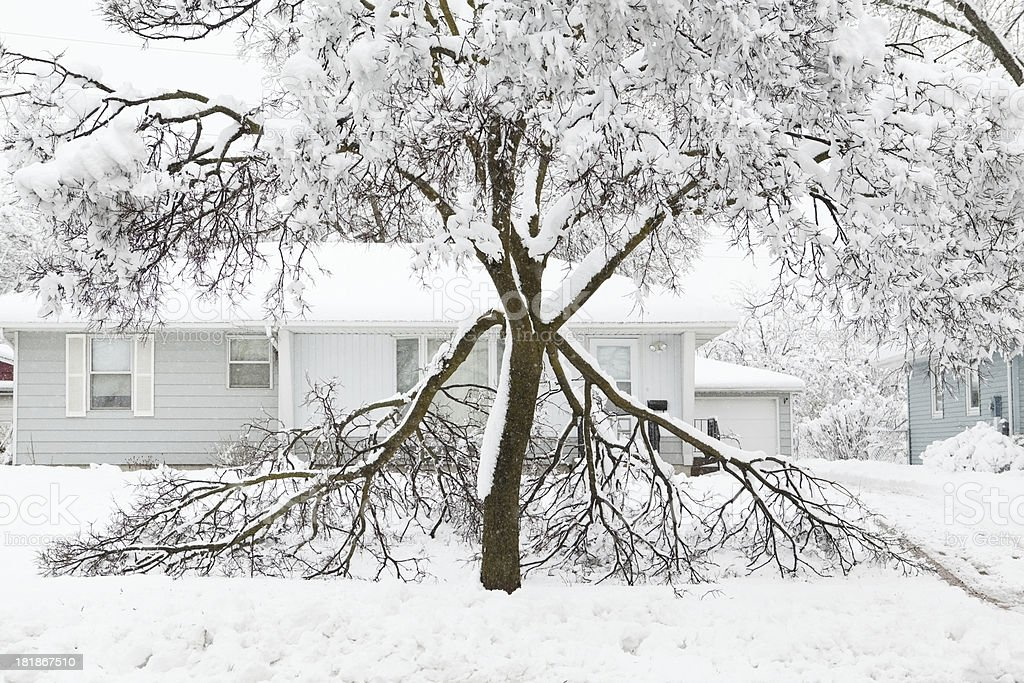 Damaged Tree During Winter Snowstorm royalty-free stock photo