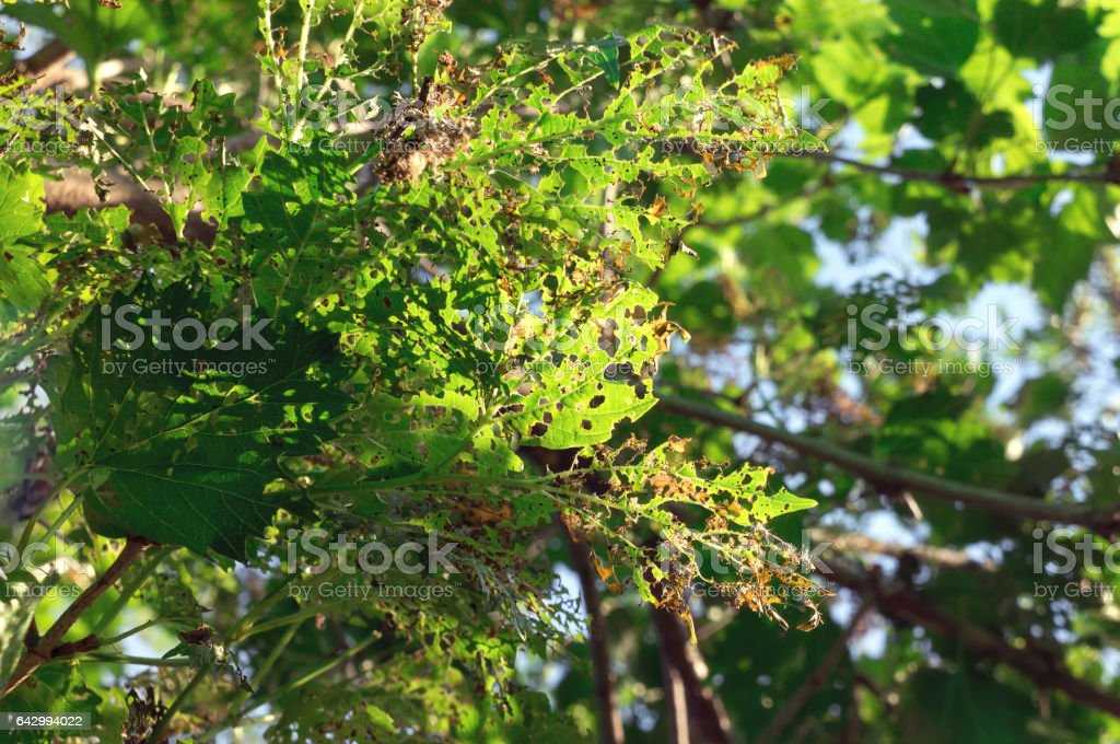 Damaged tree. stock photo