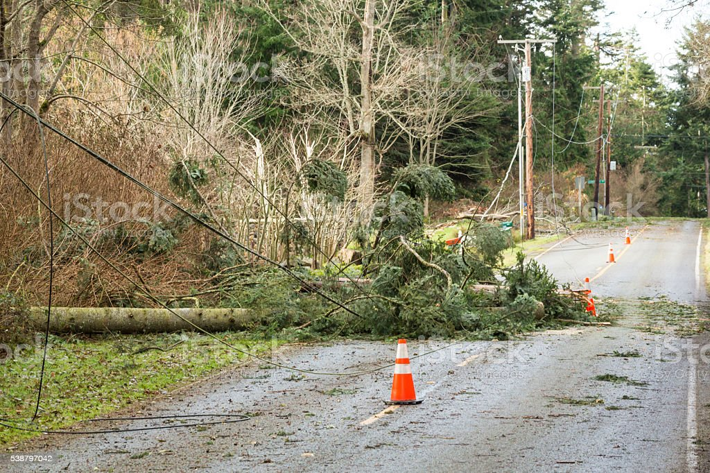 Damaged trees and power lines after natural disaster wind storm stock photo