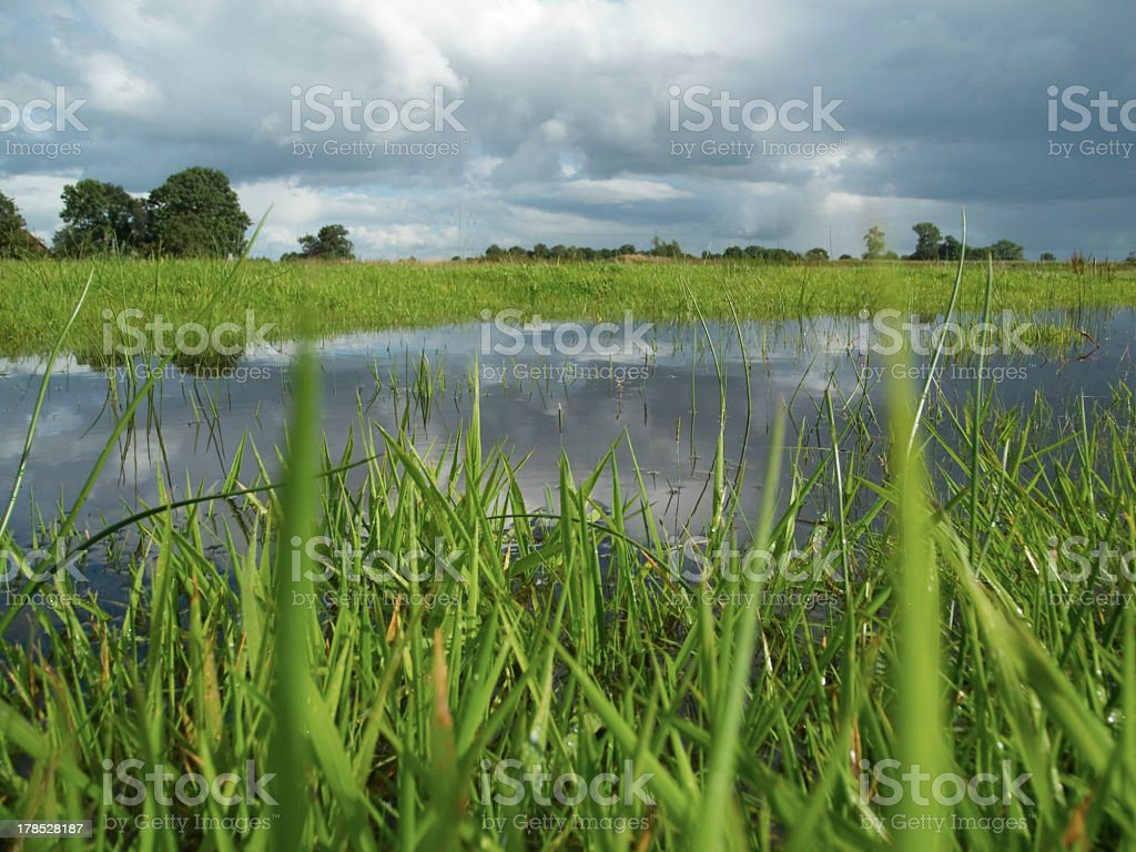 damp meadow royalty-free stock photo
