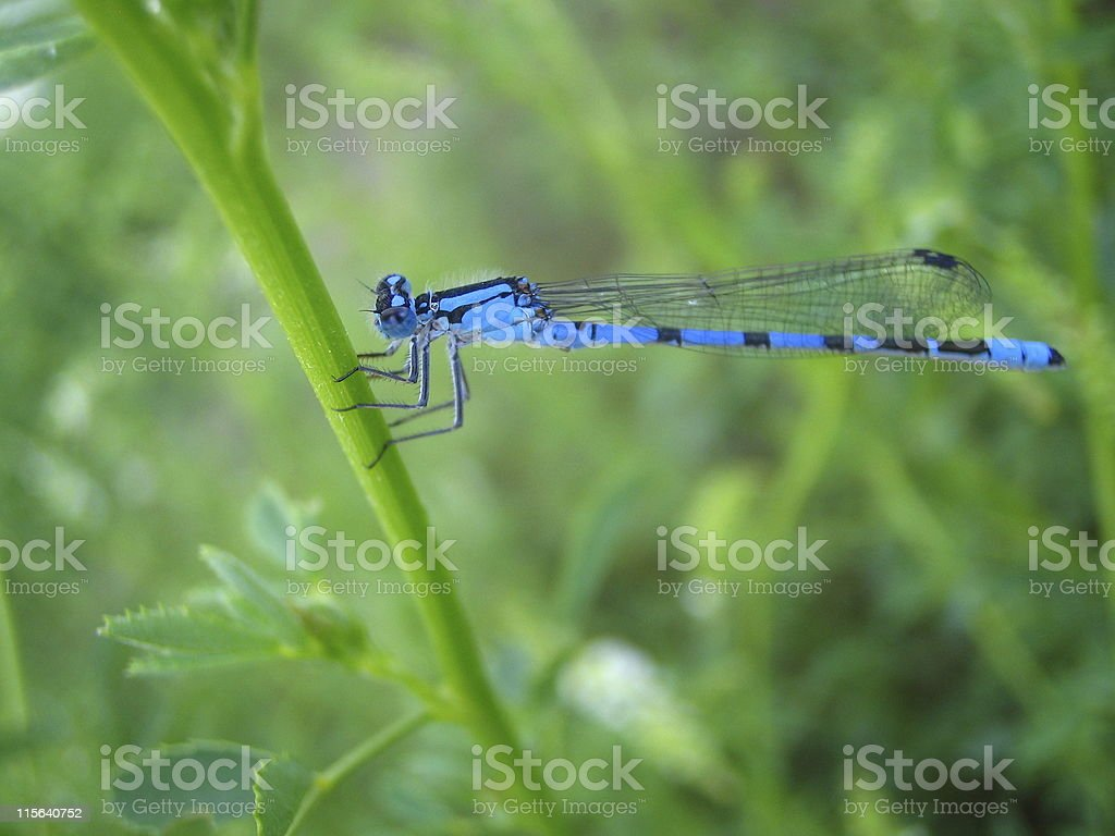 Damsel not in Distress royalty-free stock photo