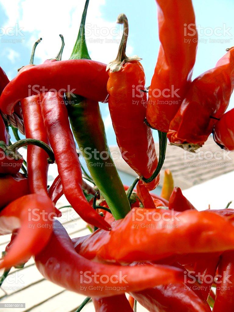 Danse de peppers ! photo libre de droits