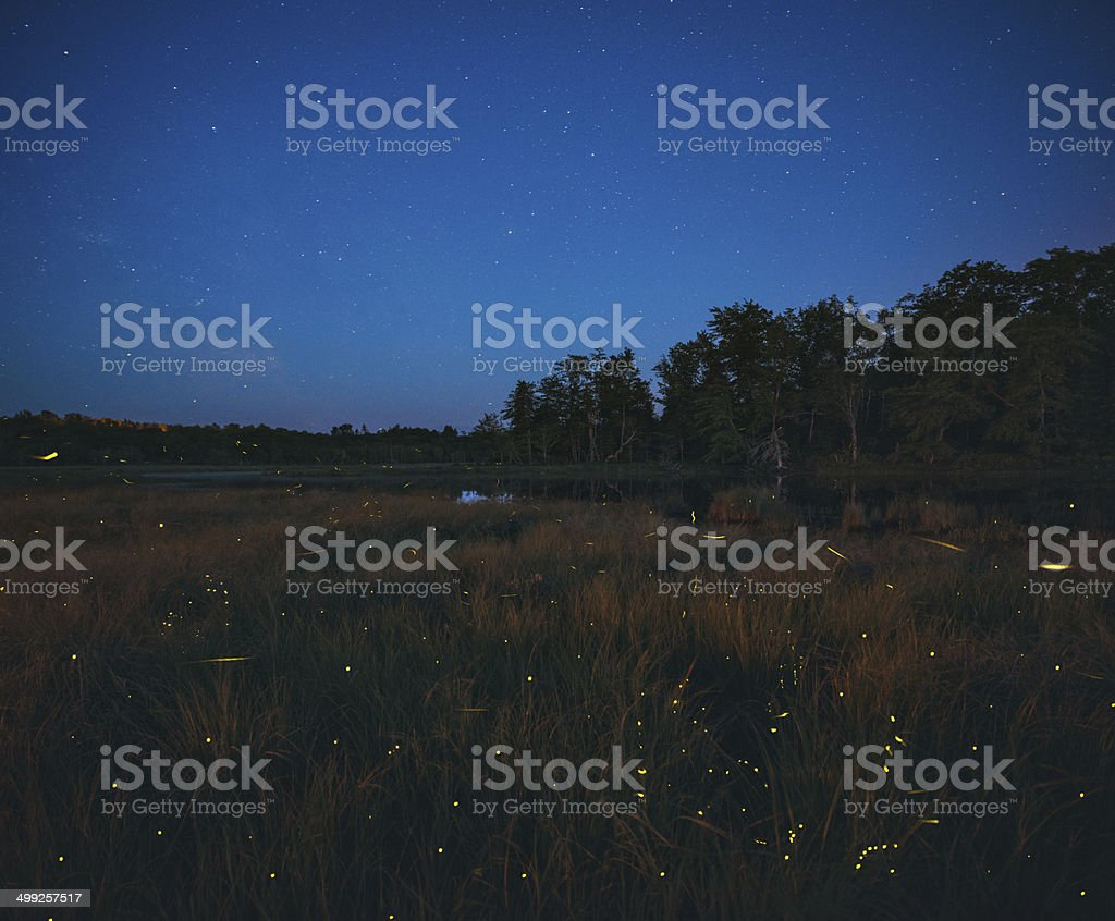 Dance of the Fireflies stock photo