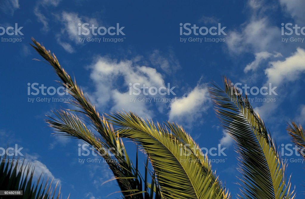 Dance of the Palms royalty-free stock photo