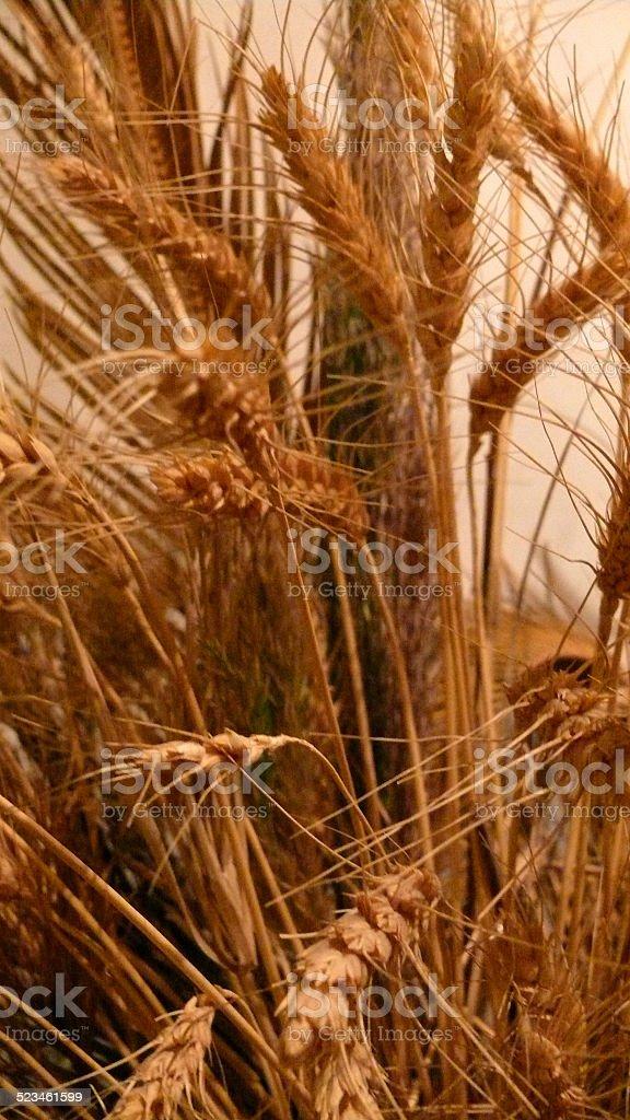 Danse de blé ! photo libre de droits