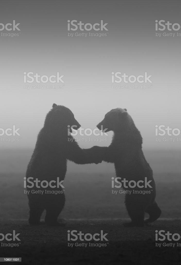 Dancing Bears royalty-free stock photo