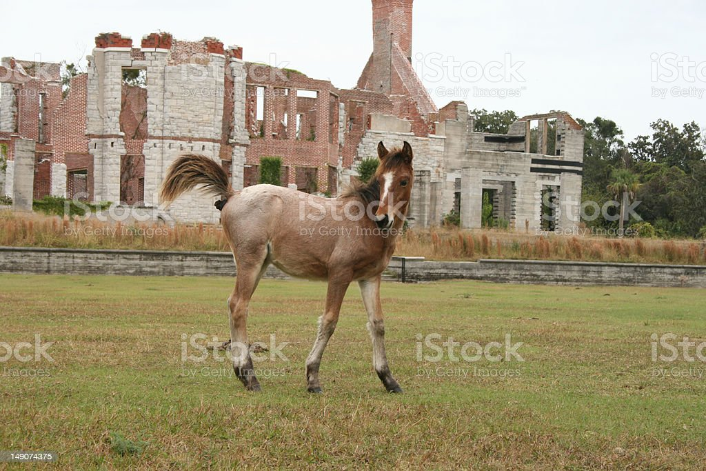 Dancing Colt at Dungeness stock photo