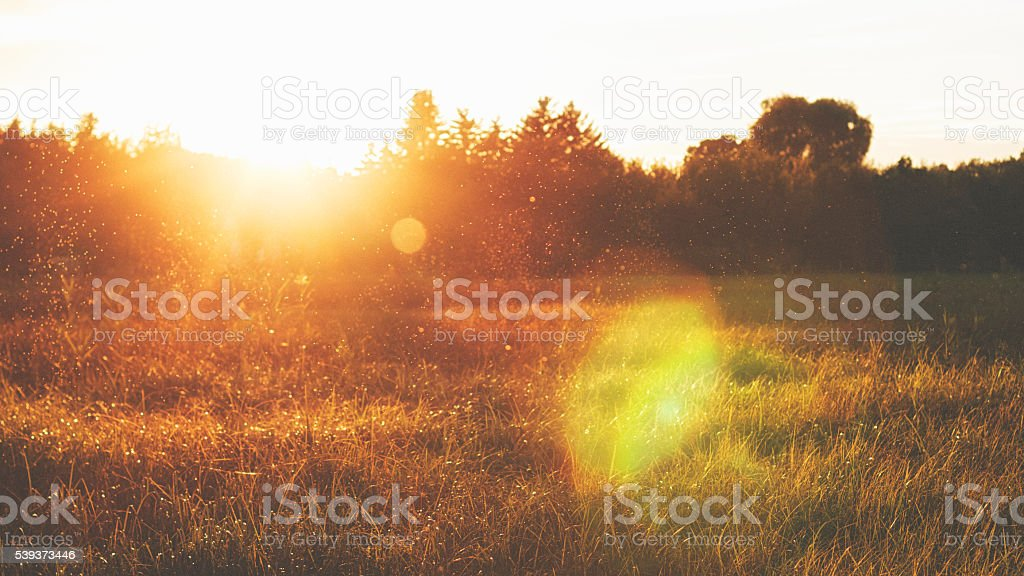 Dancing gnats in sunset stock photo