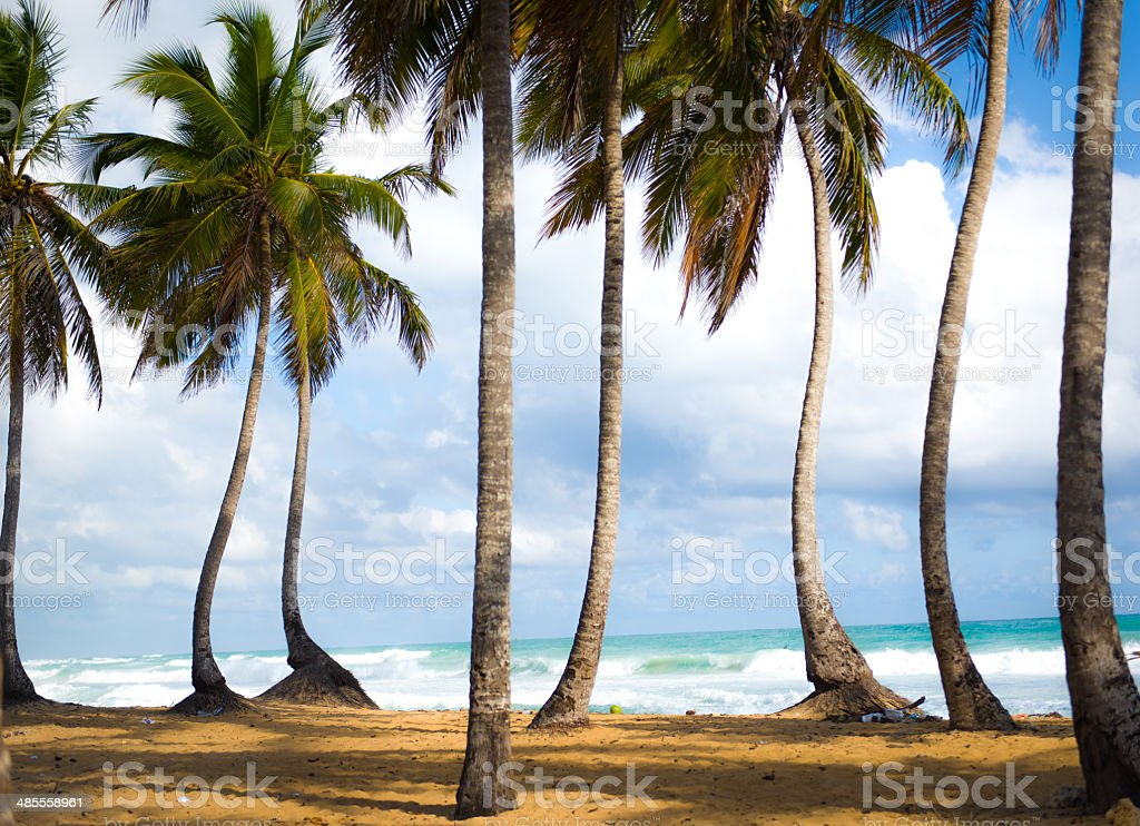 Dancing Palm Trees stock photo