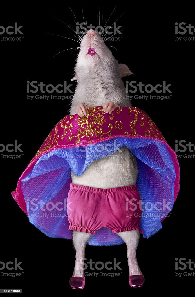 Dancing Rat royalty-free stock photo