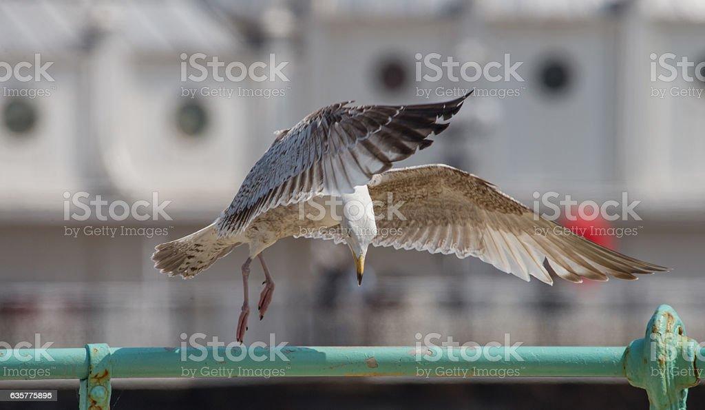 dancing seagull stock photo
